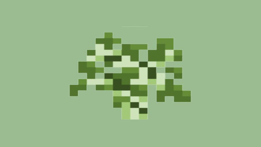 Birch Sapling (6.2)