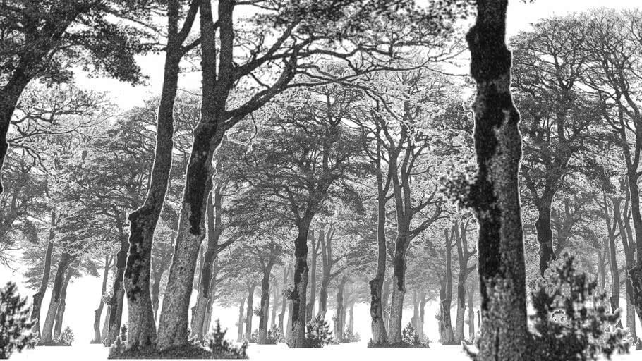 Winter trees – 5