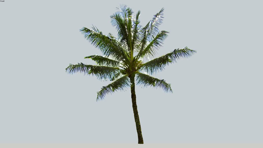 40' CoconutTree 2D
