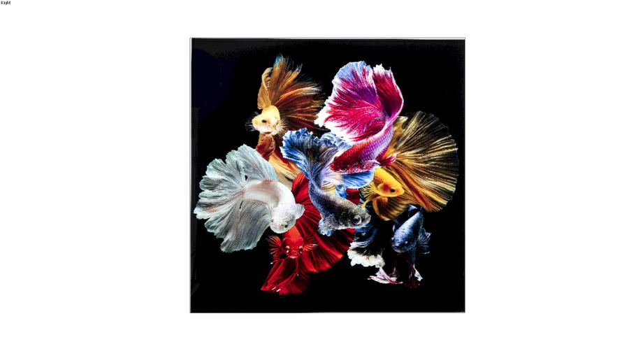 53082 Glass Picture Colorful Swarm Fish 120x120