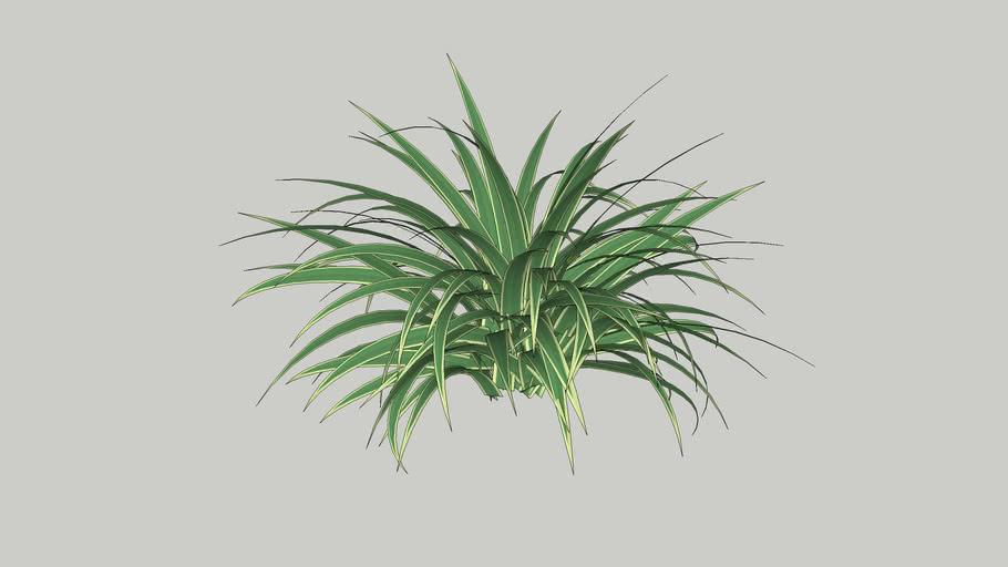 Vegetation 22