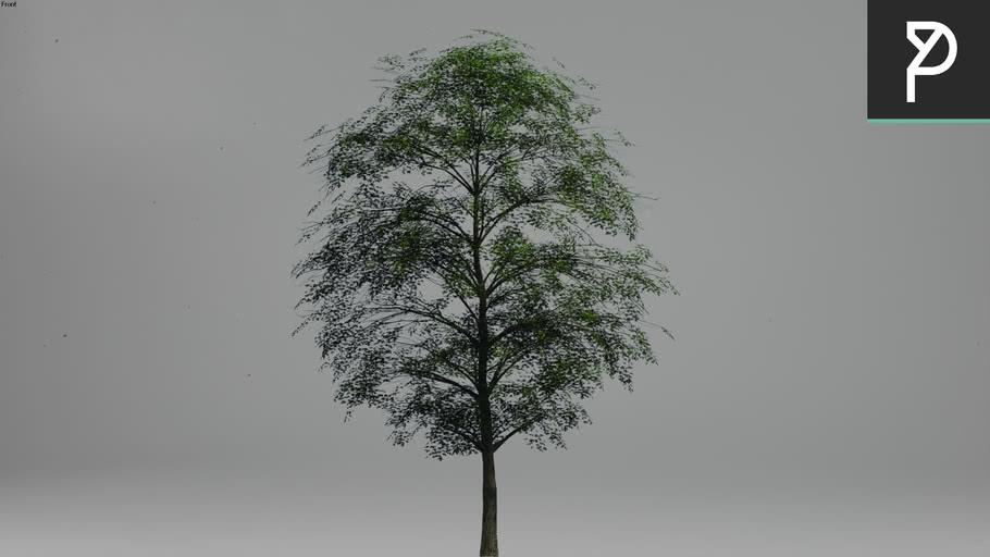 2DTrees_009 | Leaf Medium