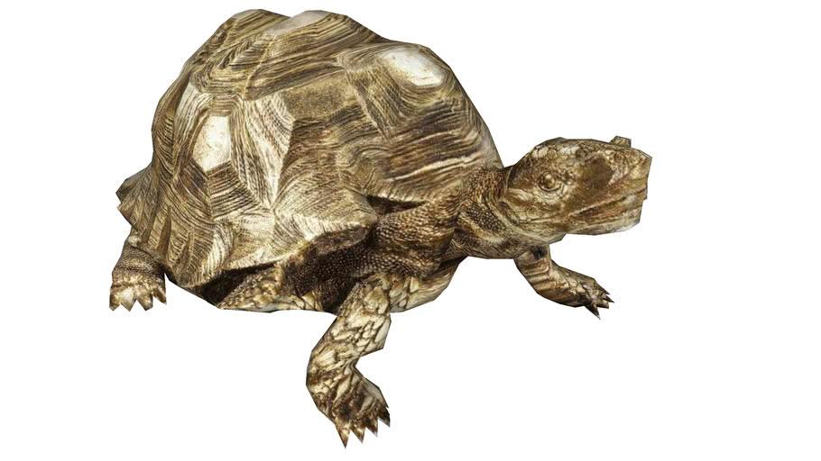 61959 Deco Figurine Turtle Gold Medium