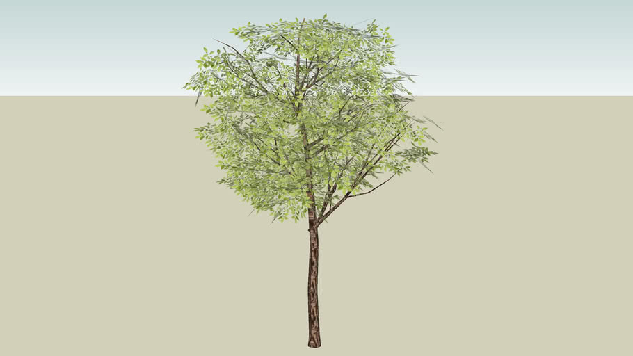 Standard Tree - Round
