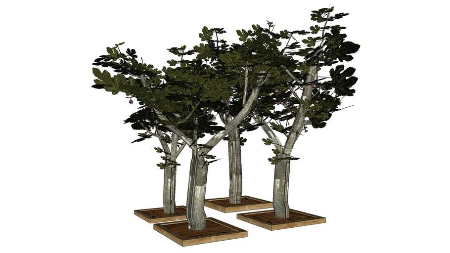 petite foret de figuiersen 3D,  Fig TRee 3D, arbre 3D, forest