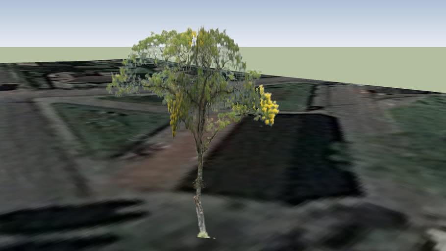 Árvore - Paranapiacaba