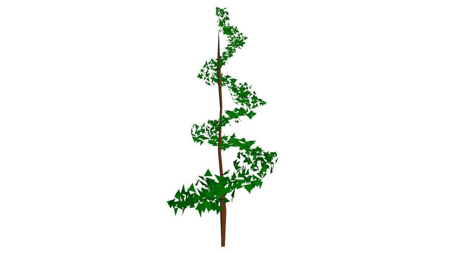 Spiral hedge topiary shrub