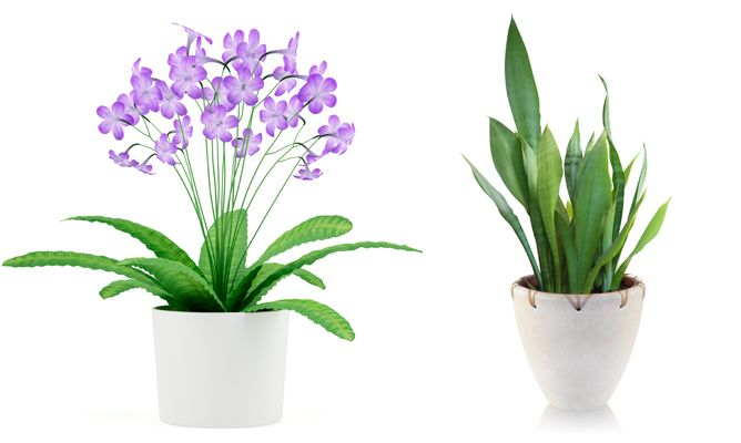 Best  - All plants