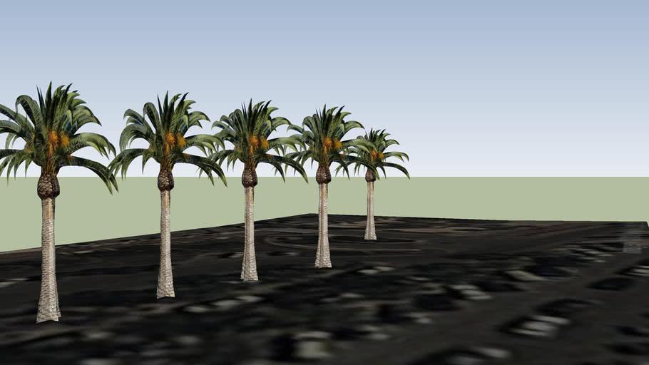 trees 37