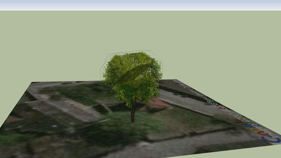 Strom na dvoře kaple sv. Jana Křtitele