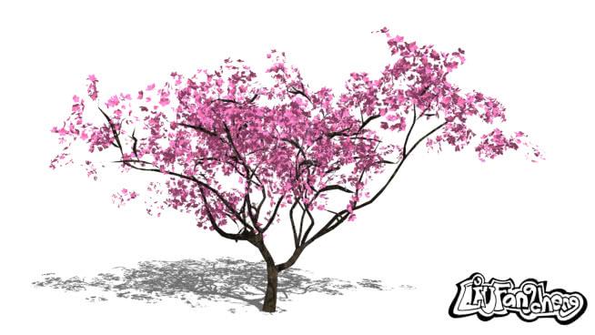 Plantes/arbres