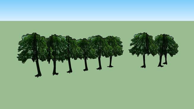 Drzewa Olsztyn 162