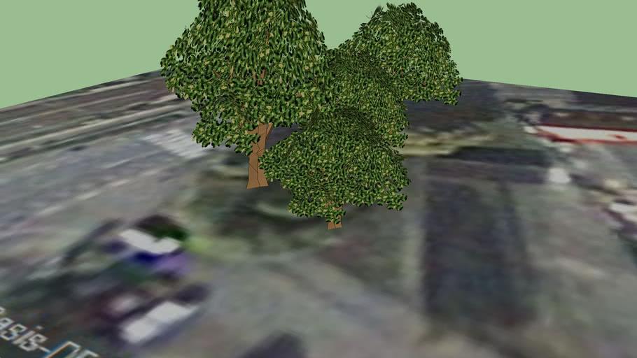 Bäume in der Löbstedter Straße - Jena