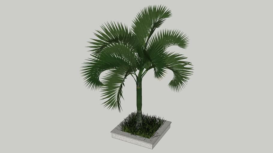 cay tree