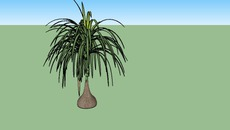 Plants exterior