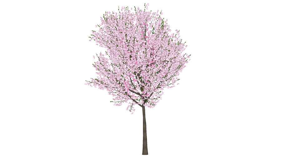 3d Cherry Blossom Tree Fabricated 3d Warehouse