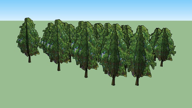 Drzewa Kortowo 50