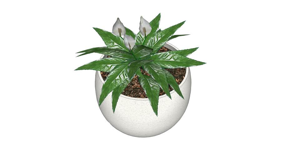 Plante / Plan