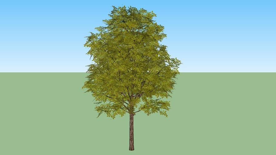 tree - arbol frondoso