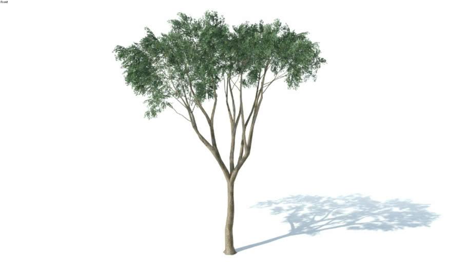 Vegetação 3D