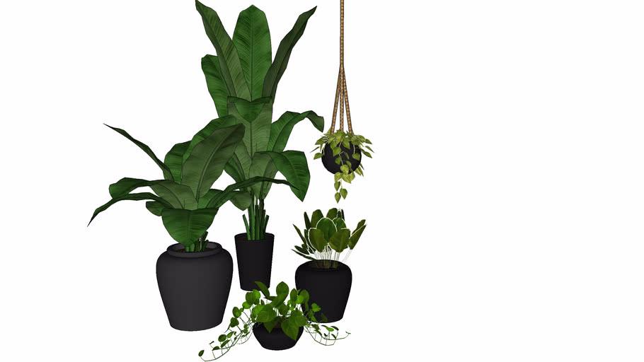 paisagismo-plantas