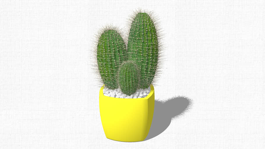 Cactus with tubs