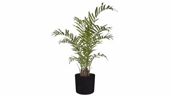 dew's plant