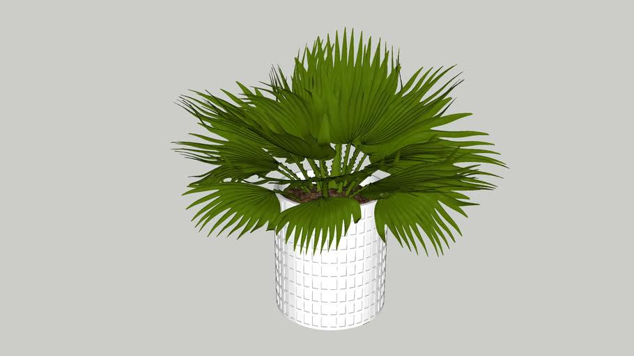 Vegetation 05