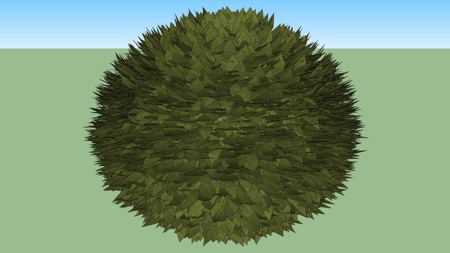 C Grass