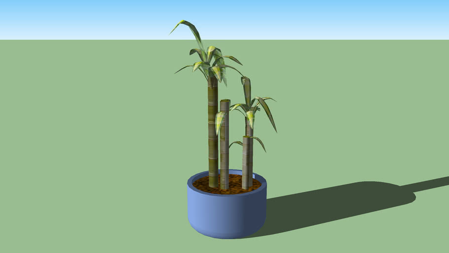 Indoor Small Bamboo Plant 3d Warehouse