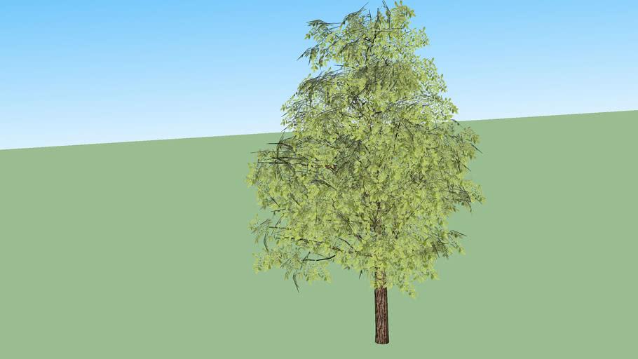 Árvore 03