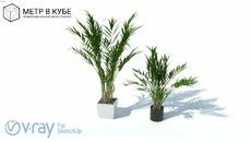 Plantas - Vasos/Interiores