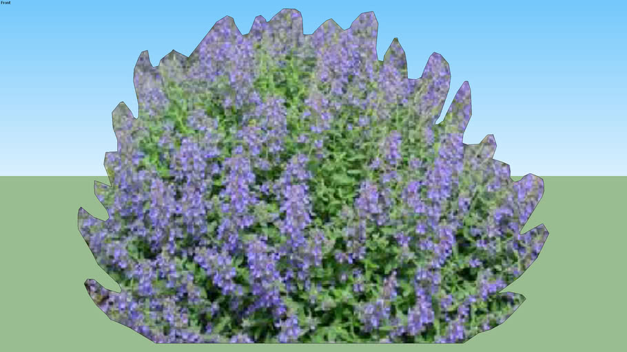 2D Catmint