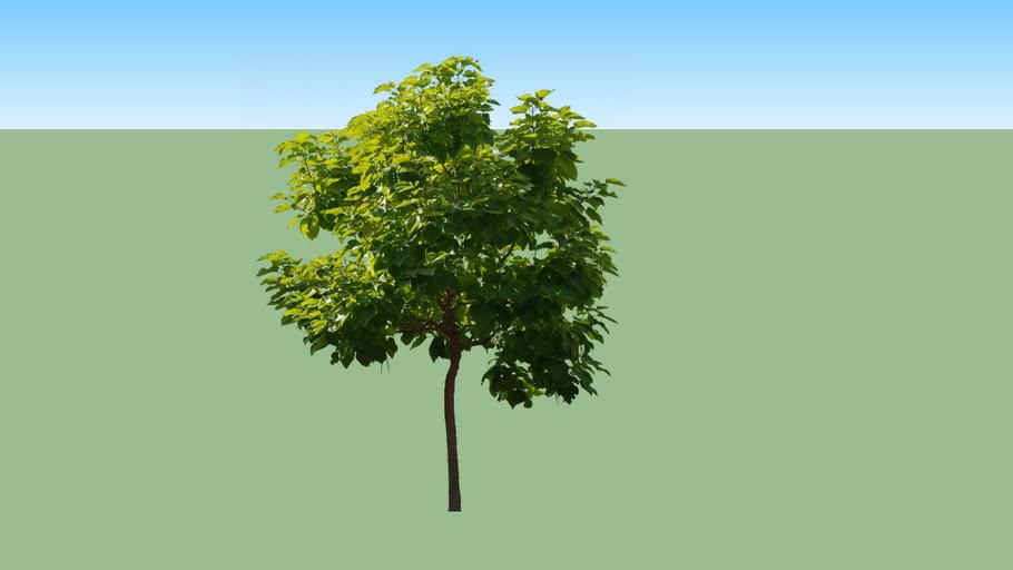 Árvore tree
