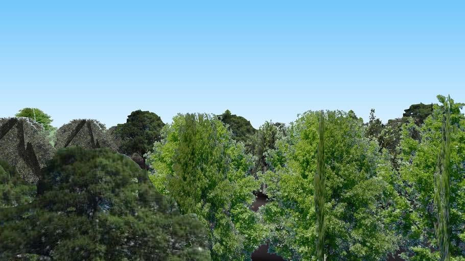 Various of Trees in Shoefield, WI