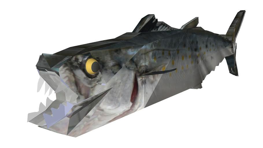 Atlantic Spanish Mackerel