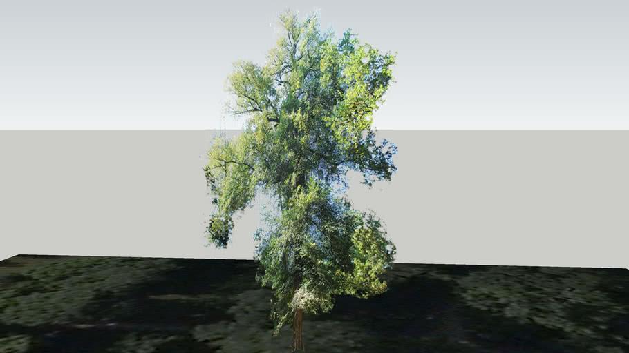 Zamok Veselí nad Moravou - Strom 139