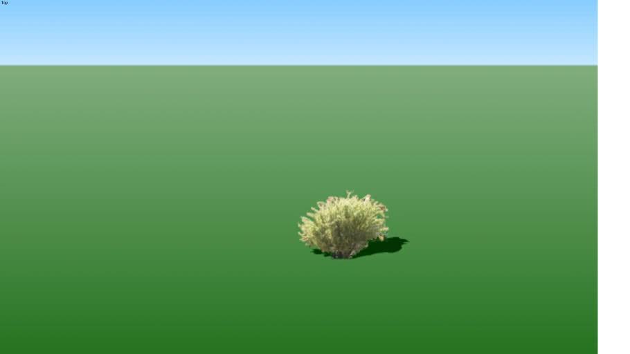 tree ocotillo