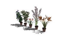 Paisagismo / plantas decorativas