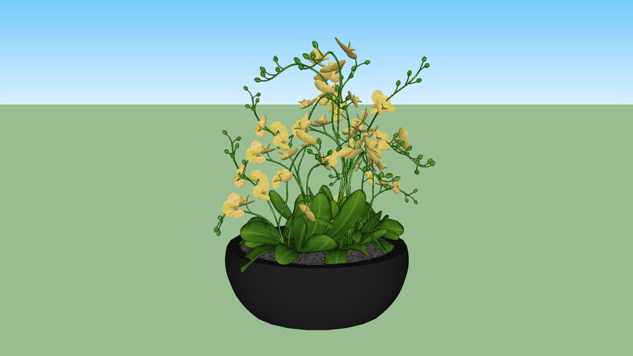 Vaso de orquídea amarela