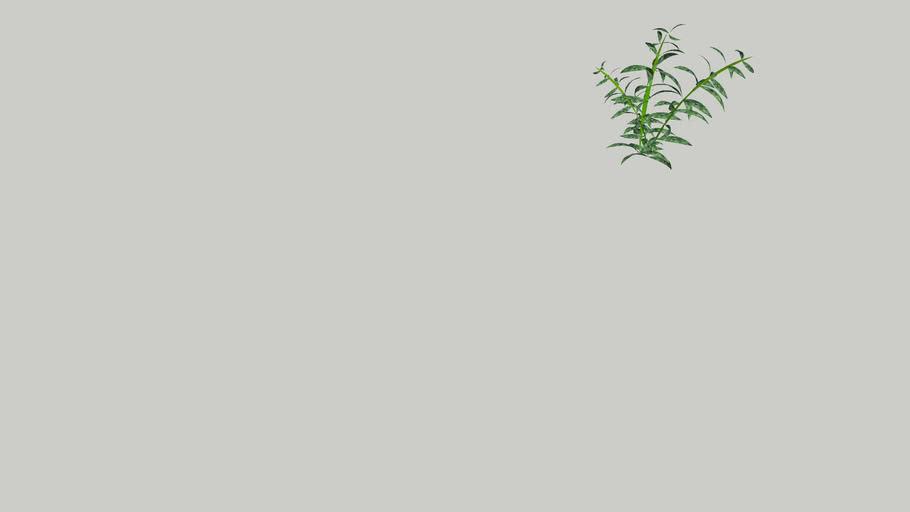 aquatic plant 2