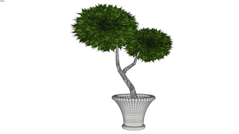 Plant, Decorative Potted Plant2