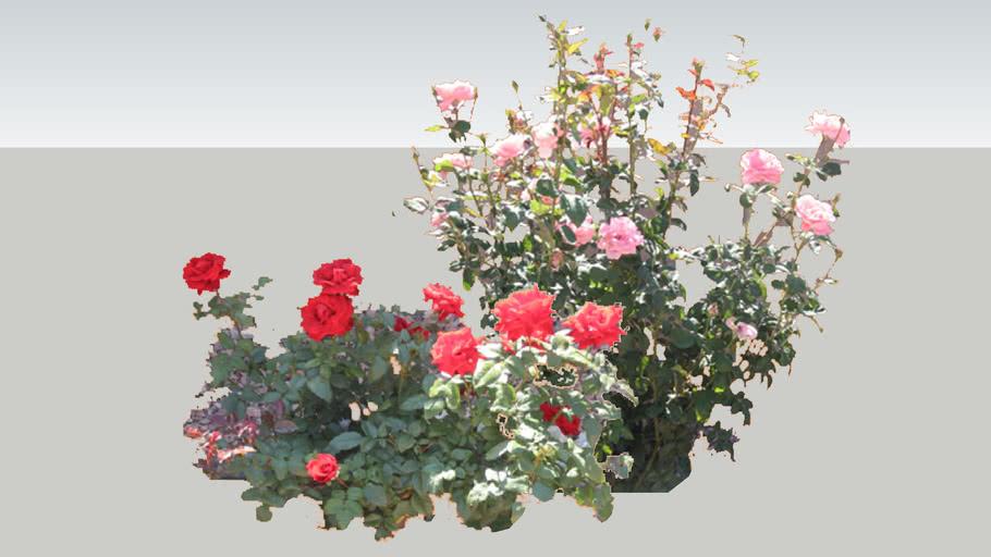 flower konishi