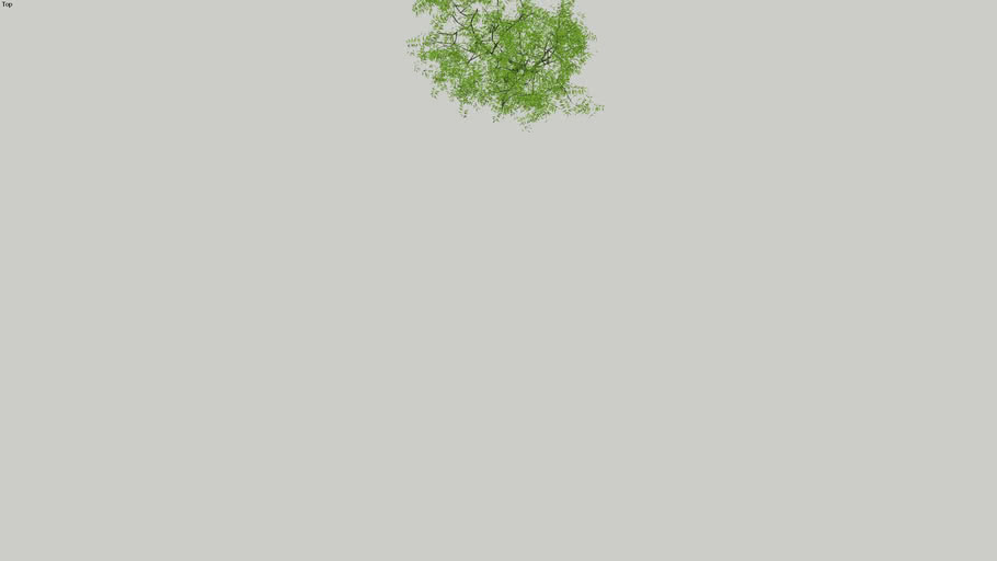 arbre 3D / Tree 3D