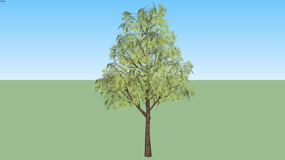 Árvore 04