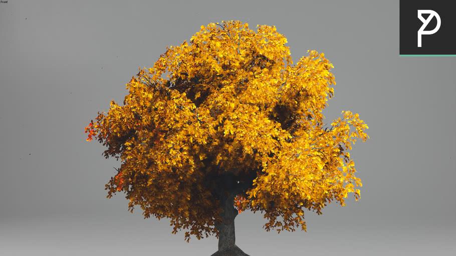 2DTrees_036 | Leaf Medium