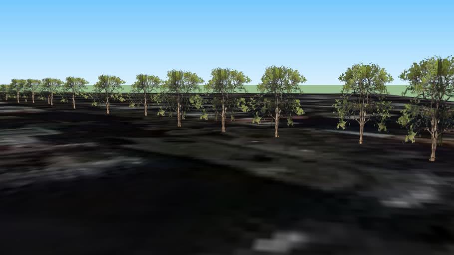 Árboles en Av. 53