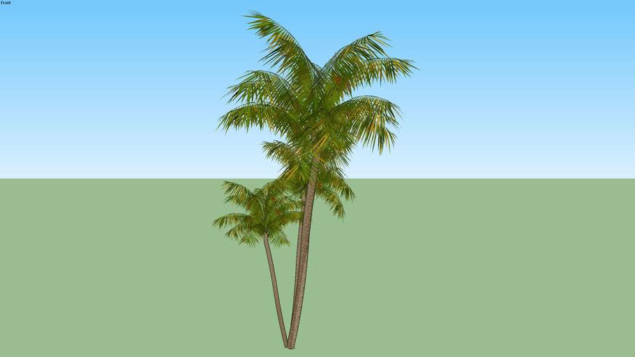 Palmeira 08