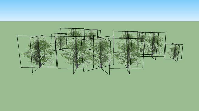 Durrow Trees 01