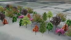 vegetações